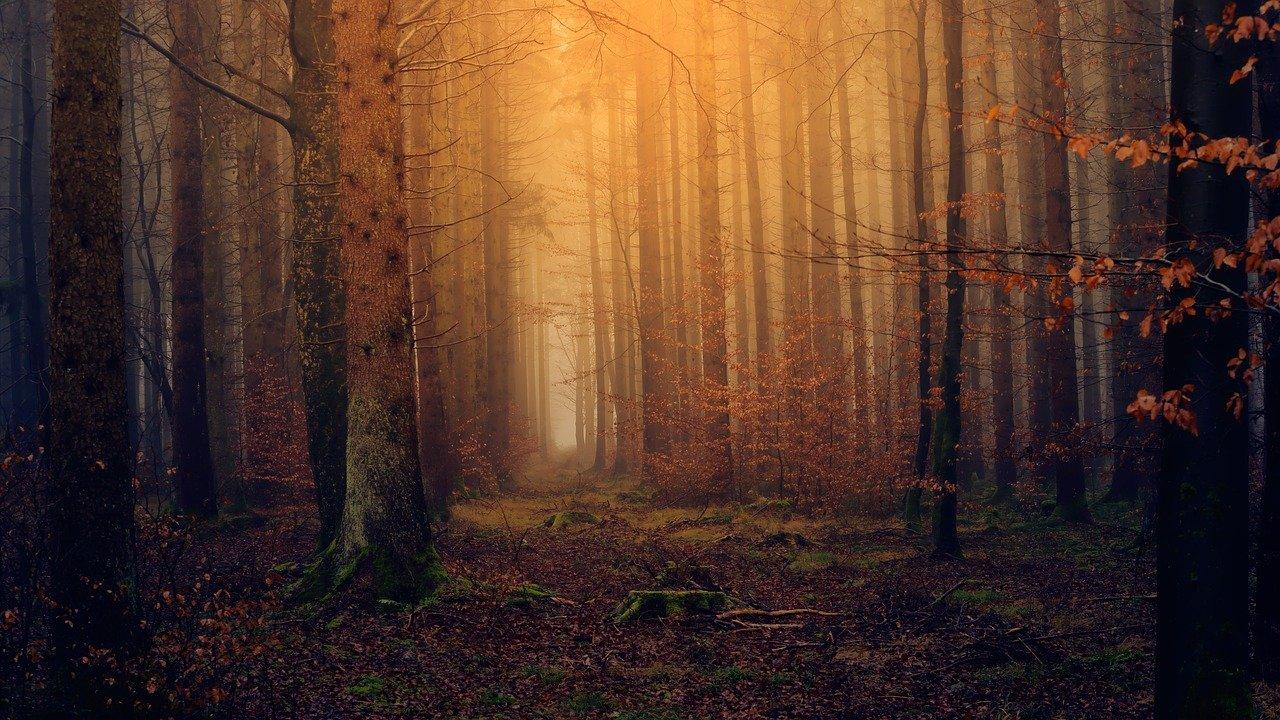 Wald bei Dämmerung